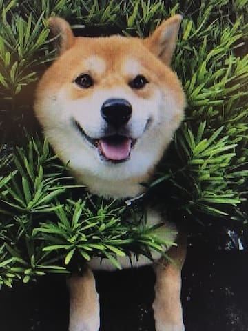 Chill doge want hang time - Jordan Valley - Дом