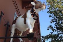Love those cows