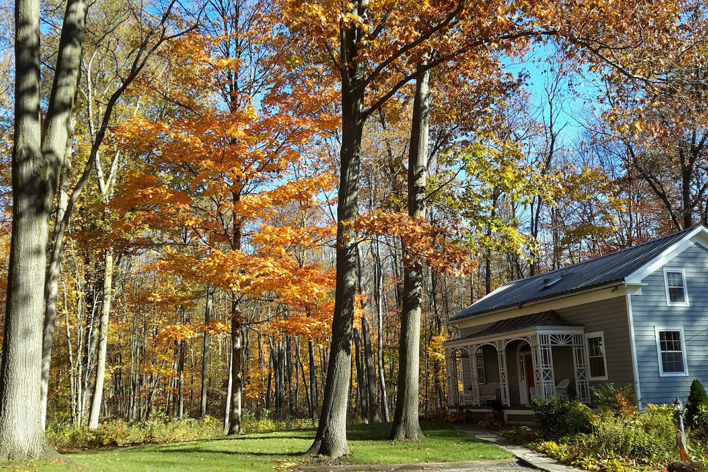 Fall colours at Buttonwood.