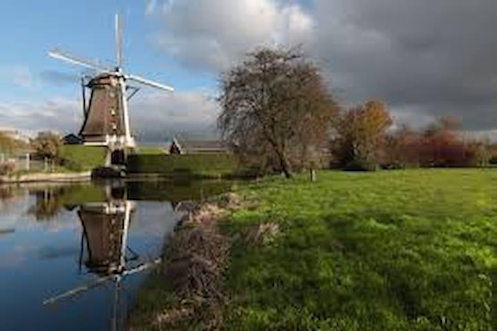 Visit Aalsmeer and surroundings
