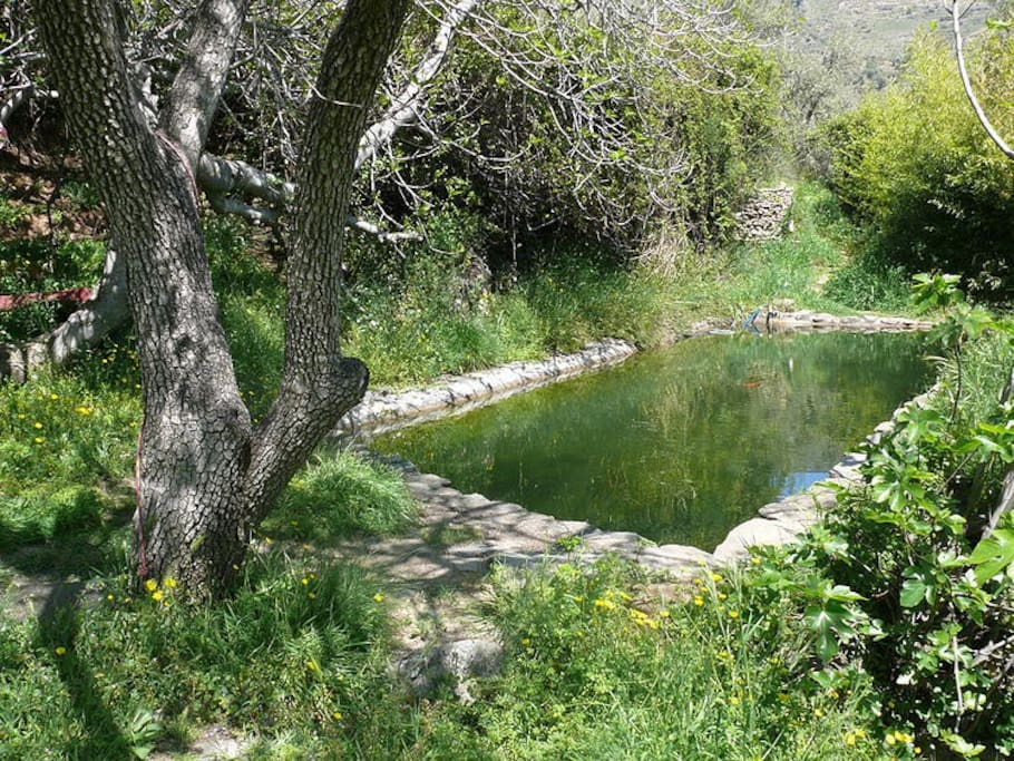 Natural spring-fed swimming pool