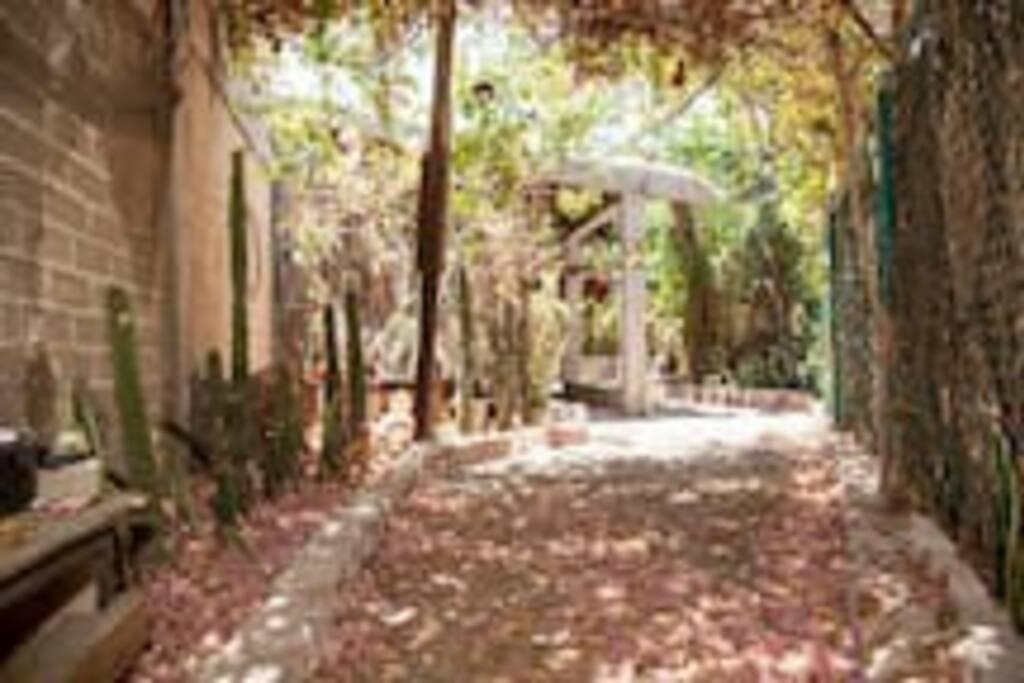 El acceso a la habitacion es por este pasillo, iras pisando sobre una alfombra natural formada con hojas de bugambilea.
