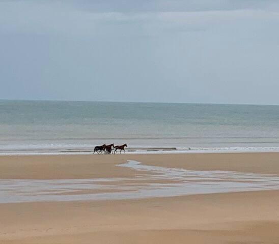 Derrière la Dune  La mer à l'abri