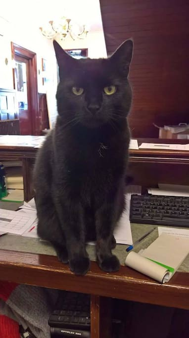 Hotel Cat Sly on Reception