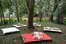 Bosque com vista para o lago! Espaço para contemplação e meditação!