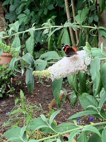 "The neighborhood is called ""de vlinder buurt"". This means the butterfly neighborhood. It's called this way because of the huge amounts of butterflies that habit the are during summer."