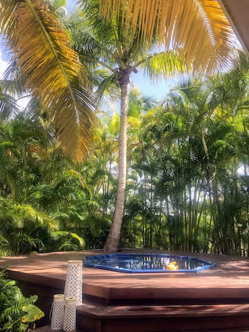 Nice Coconut trees cover Jacussi