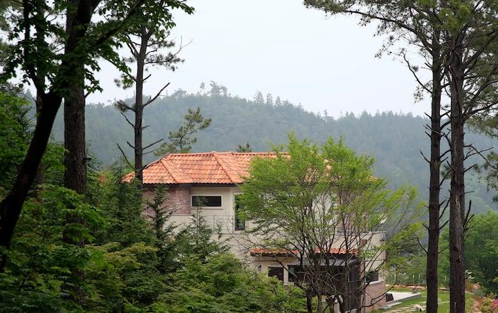 <숲속의 아침> 평화로운 편백숲속 편안한 힐링의 공간입니다.