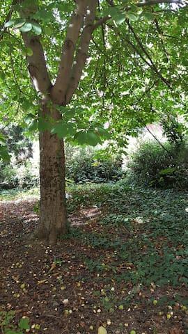 şehrin merkezinde bahçeli, sakin ev - Çankaya - Hus