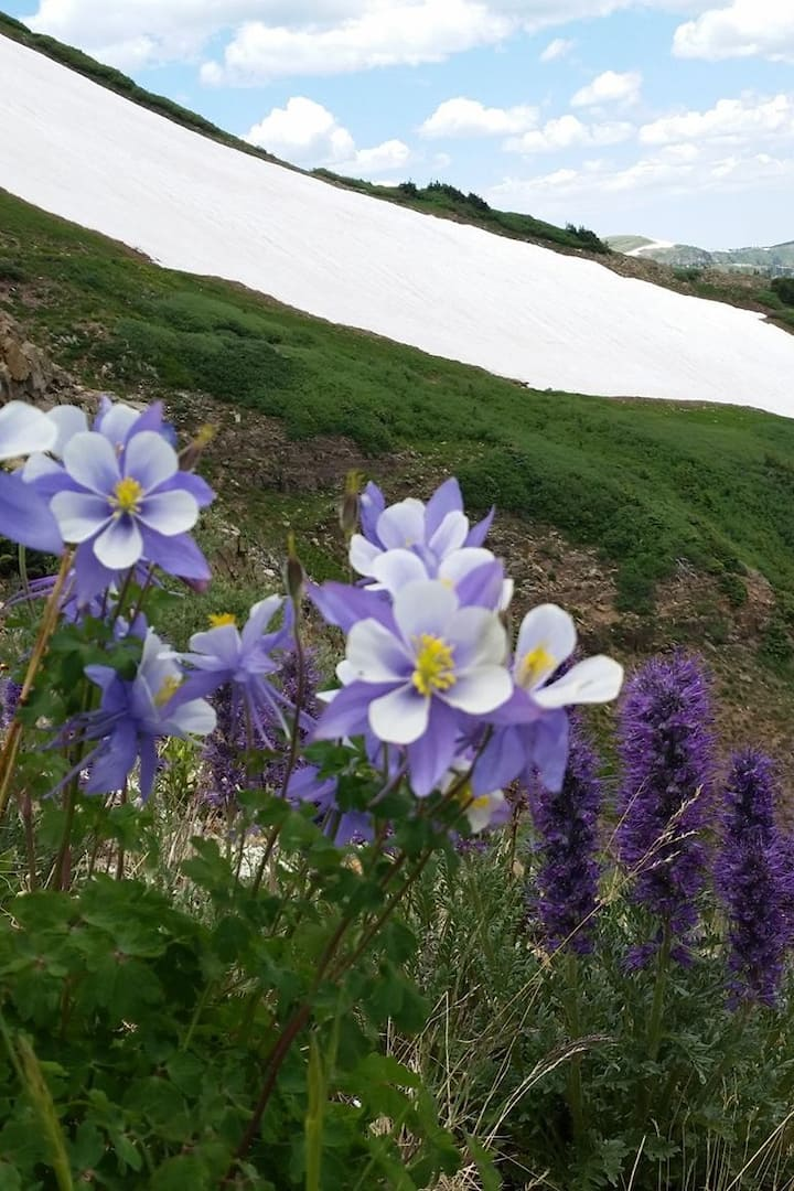Wildflowers of the Rockies