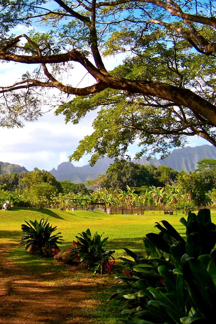Our farm is surrounded by the Koolauʻs