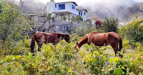 Casa de campo c/piscina, viñedo,granja de animales