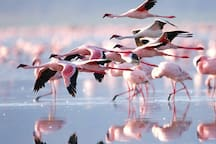 Flamingoes which fly to our beautiful island all the way from Africa!