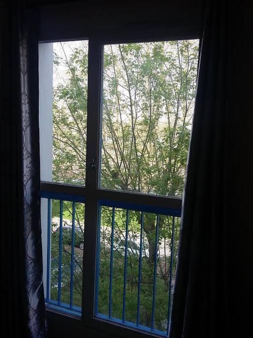 Vue de la route et son allée d'arbres depuis votre chambre