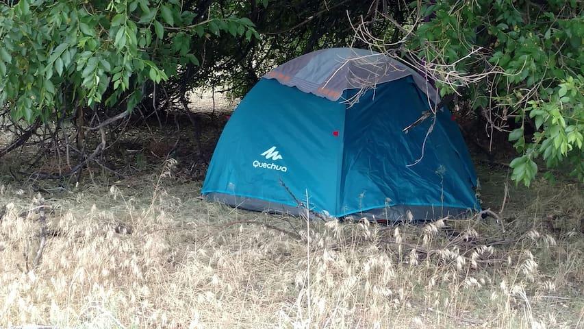 Shady Frenchmen Camp Spot near Creek