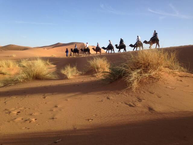 Camel trekking in desert