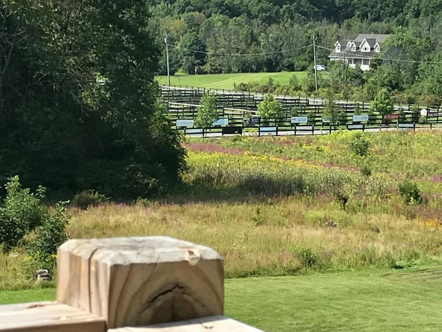 View to Horse Show