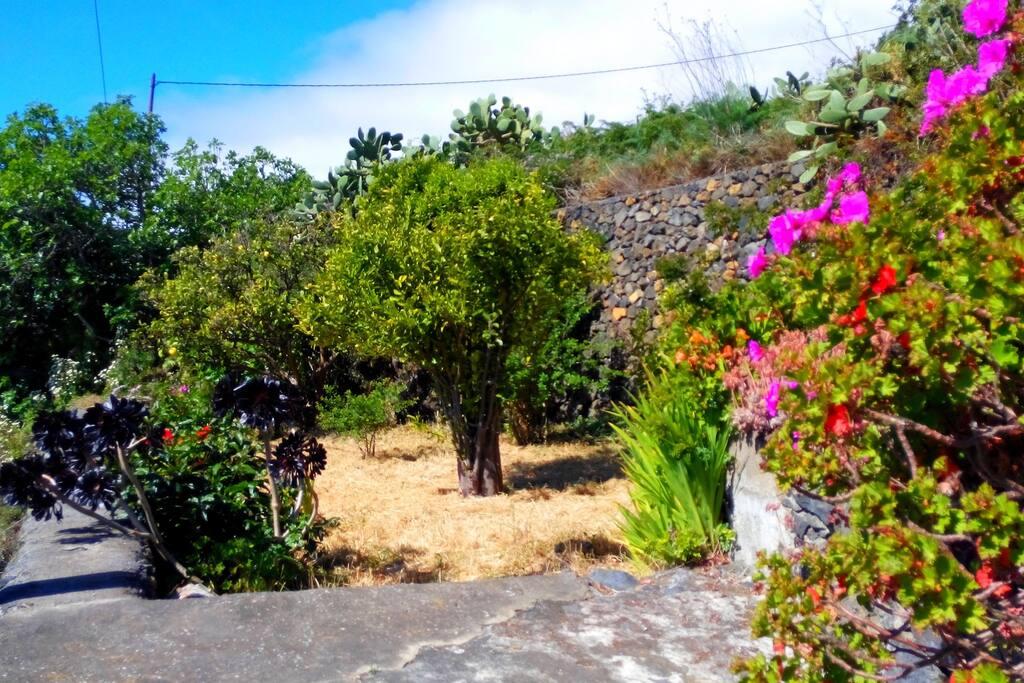 Jardín disponible