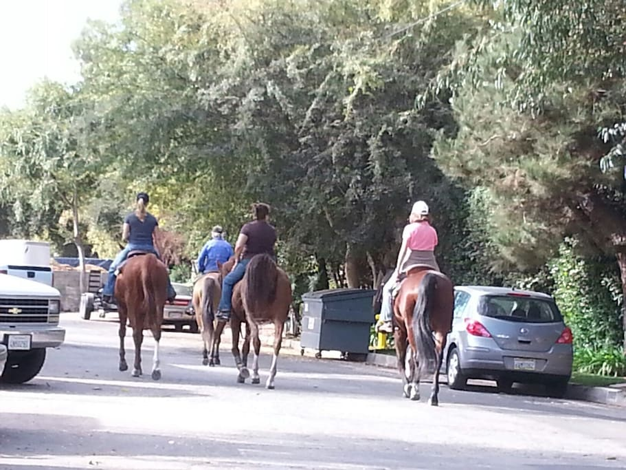 Equestrian community -   horses clippity-clop past the house...