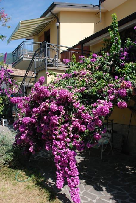 Casa dal giardino