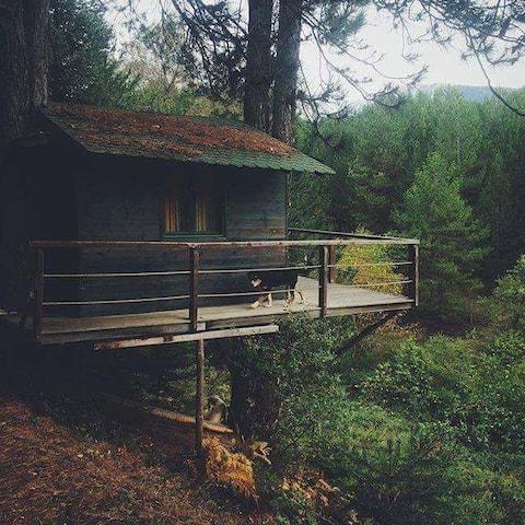 Чудовий будинок на дереві  на природі