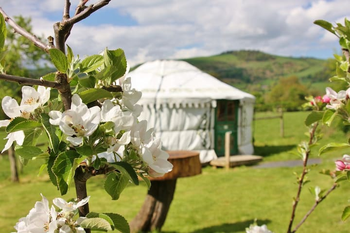 Yurt Bronwyn ~ glamping on the Welsh border