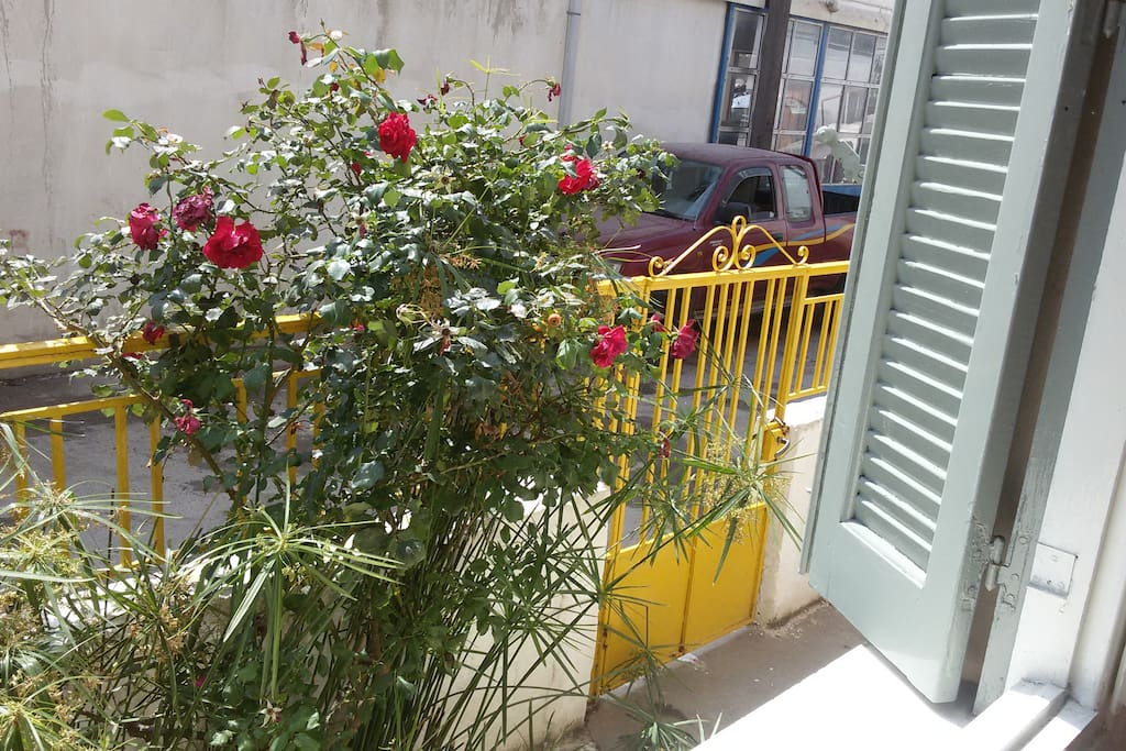 From the window you can see the wonderful roses