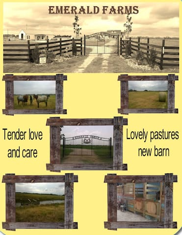BRING YOUR HORSE! Stall rentals avail, close to Waller fair grounds