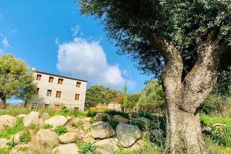 Belle villa avec piscine à Filitosa