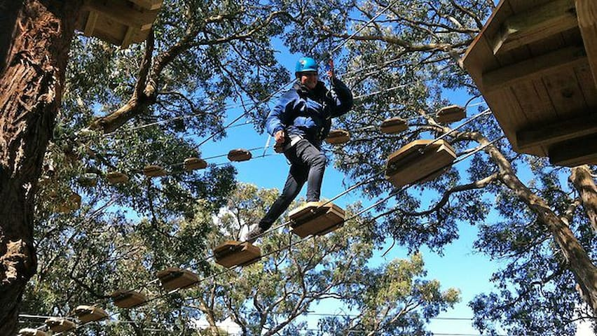 Kids and adults will love Tree Surfing at the Enchanted Maze, Arthurs Seat