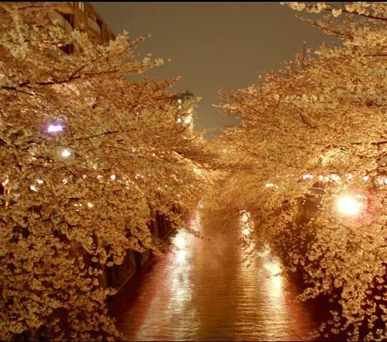 Only 3 mins from stunning SAKURA view in Meguro!