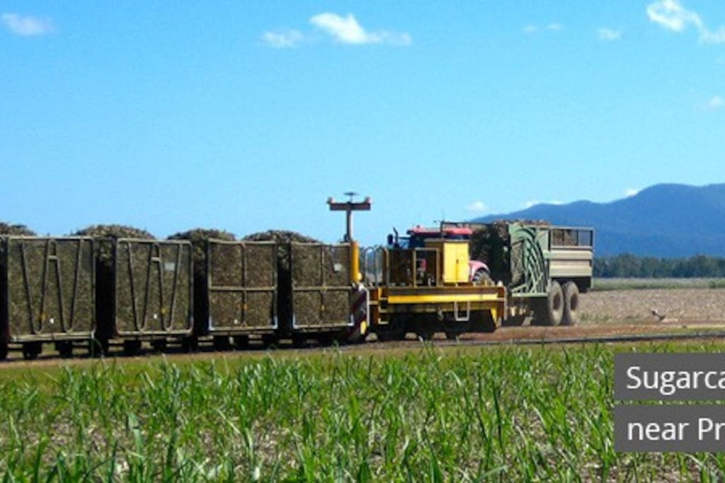 10 minutes away on your way to your home away home you might see on sugar cane harvest season
