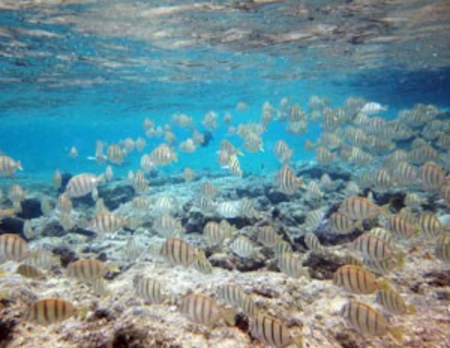 The Wai Opae tide pools offer excellent snorkeling.  Bike or walk and remember to pick up your snorkels and towels at the house before you leave.