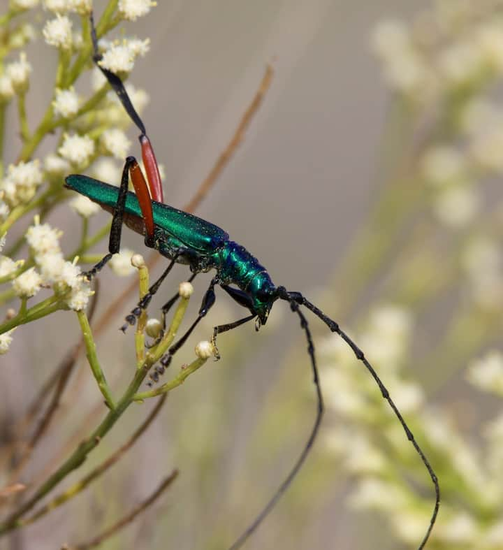 Endemic Insects