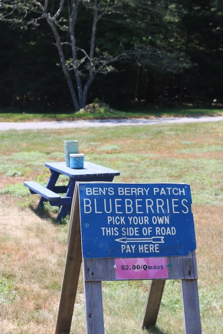 Pick you own blueberries less than a half mile down the road.