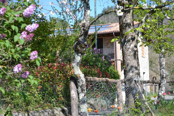 Traditional farmhouse,7 adults,4 kids under12 pool - Villa Collemandina (LU) - House