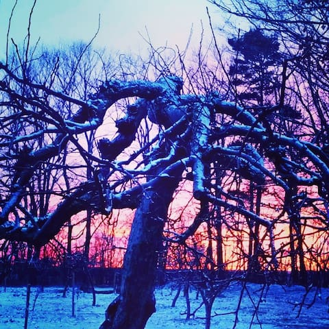 Sunset over the orchard