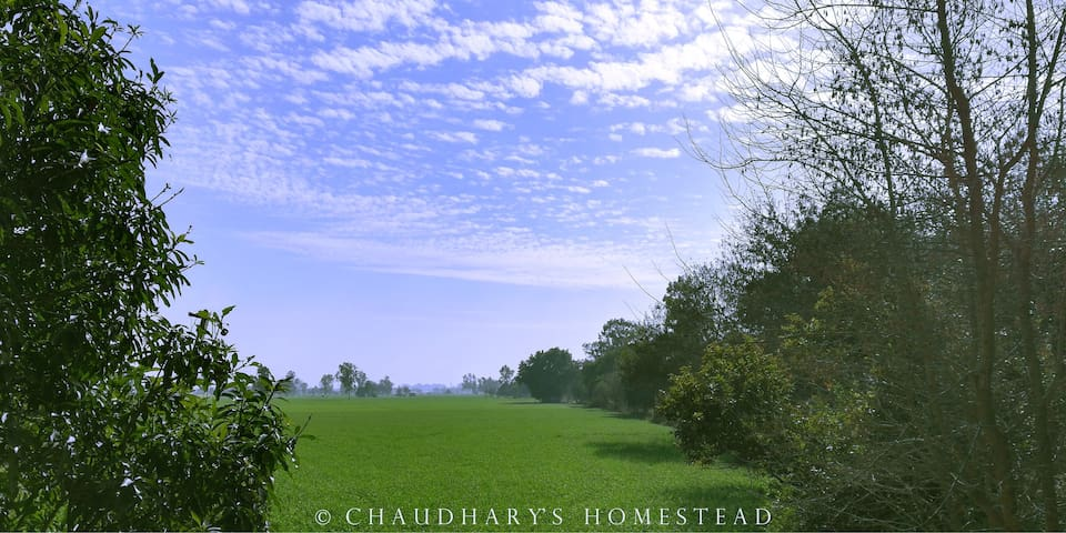Chaudhary's Homestead