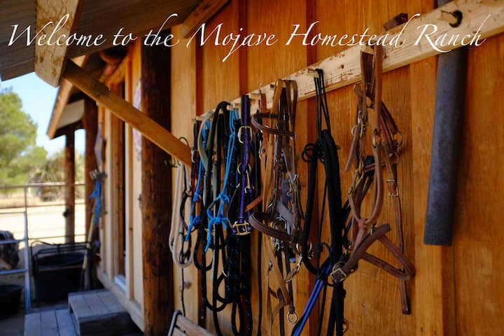 MOJAVE HOMESTEAD RANCH - a working horse rescue