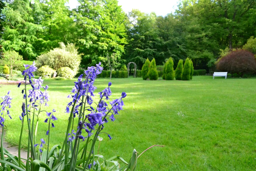 Meticulously landscaped back garden with over half an acre lawn surrounded by woodland