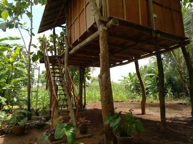 Sigiri Aliya Tree House - Sigiriya - Bed & Breakfast