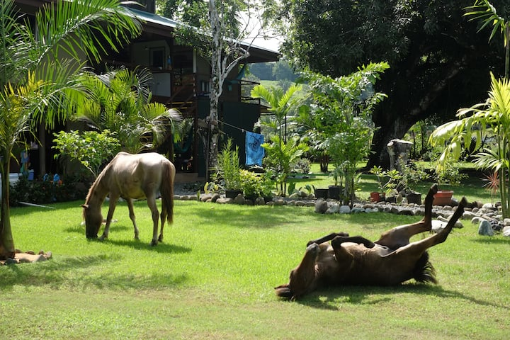 Puerto Pilon Beach Ranch
