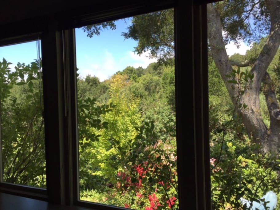The entire wall opens to windows with views of yard, and Berkeley hills.