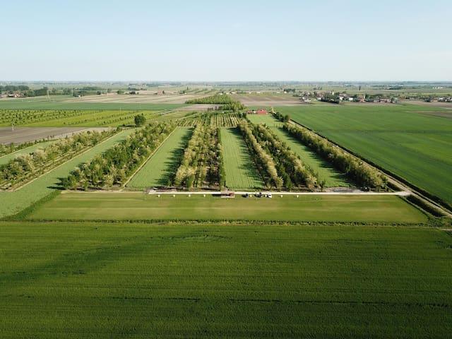 Vacanza in fattoria in mezzo a campi e alberi.