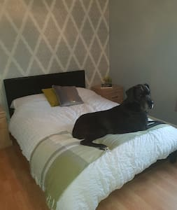 Great Danes Spare Room