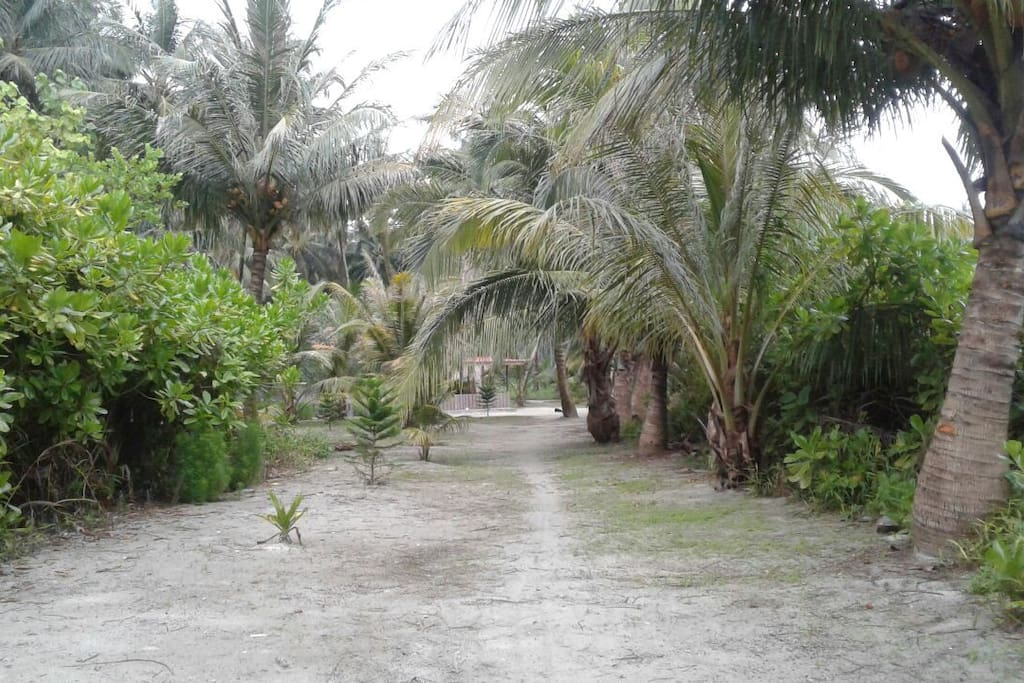 coconut farm where the property is