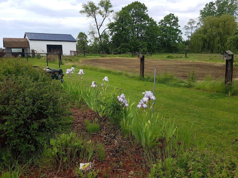 Barn and vegetable garden