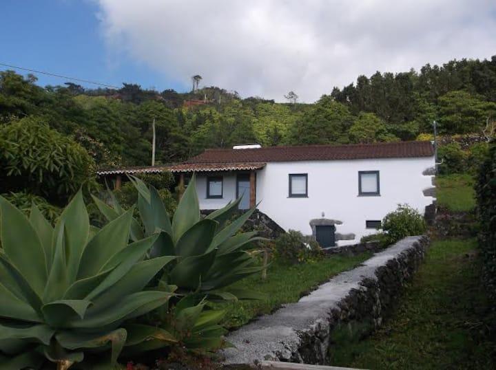 House of Relvas