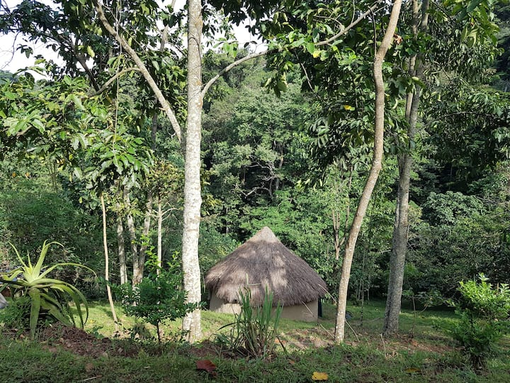 Bwindi Forest Farm . . .  A natural paradise