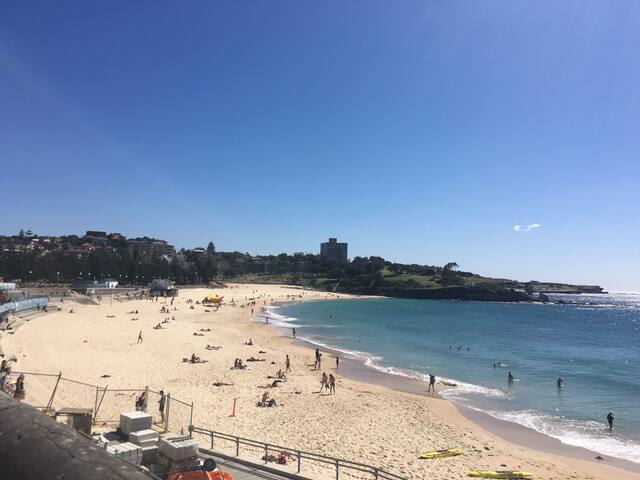 Large room in apartment in Coogee - Randwick - Apartment